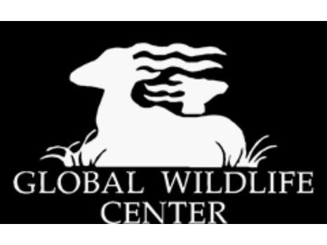 Global Wildlife Foundation - Child Safari Package