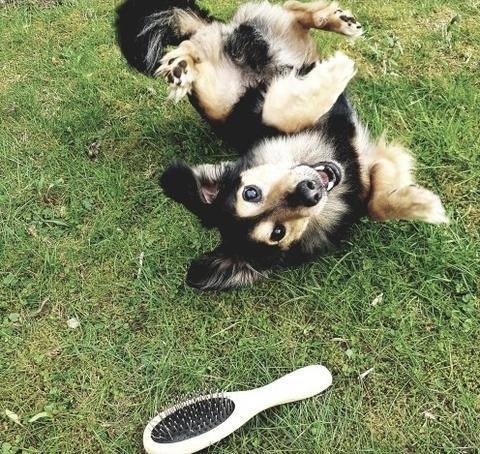 Ernährung während des Fellwechsels beim Hund