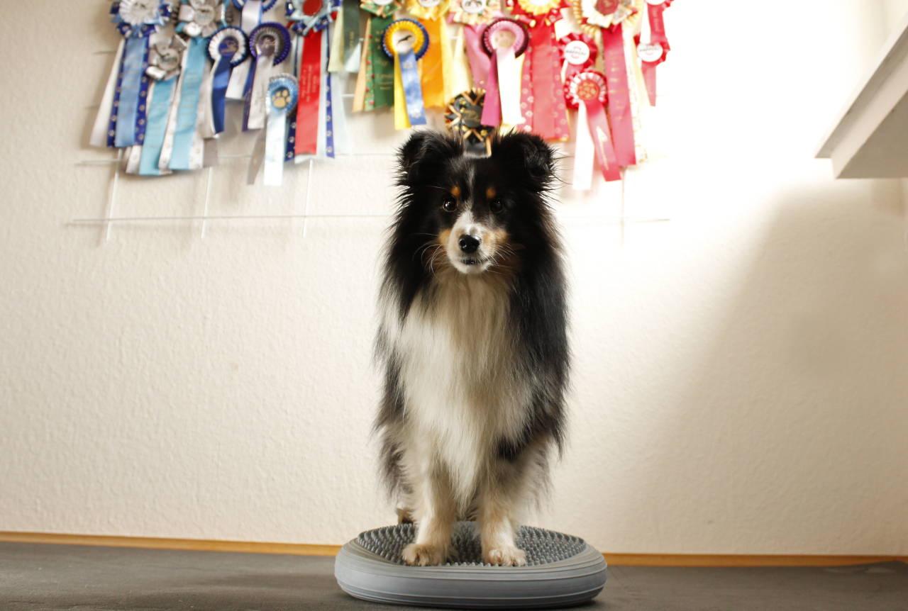 Balancekissen-Übungen zuhause für den Hund