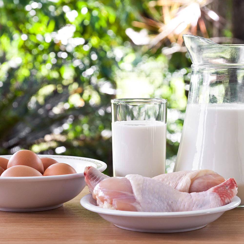 High Protein Diet for Menopause