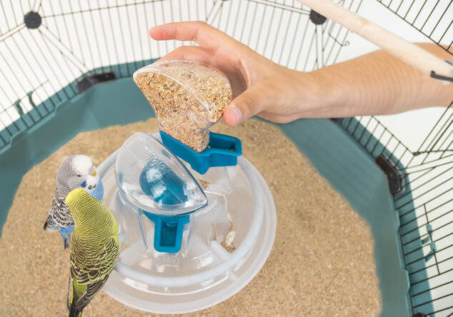 Geo easy to refill feeder