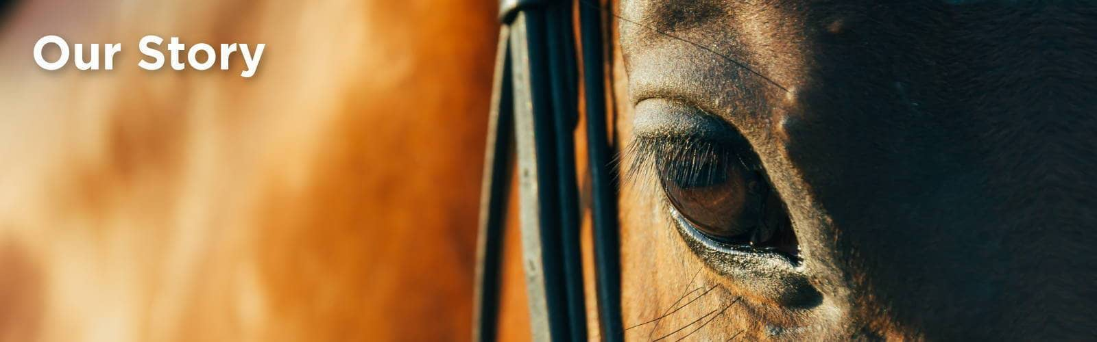 C4 our story with close up of horse