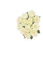 hf Dozen White Roses