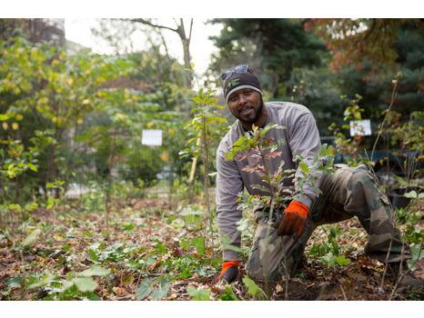 Donate $75: Fund a Sapling Planting