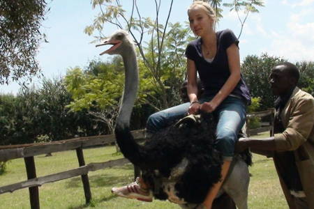 Ride an Ostrich at the Ostrich Farm