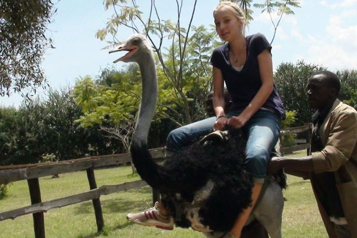 Image result for ostrich farm nairobi