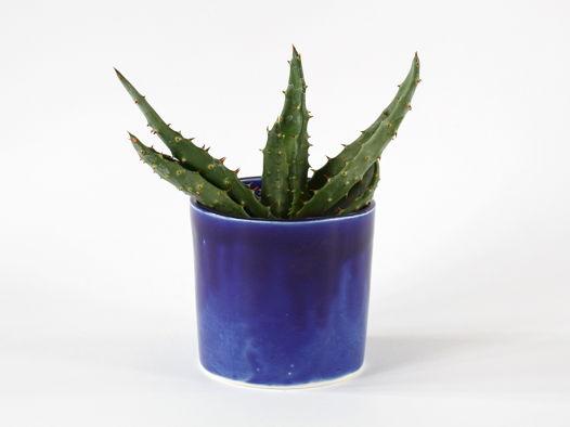 Алоэ в синем керамическом кашпо М