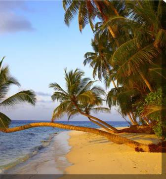 Tropical Canvas Art, Beach Canvas Art
