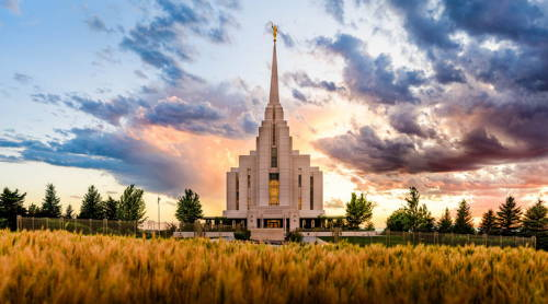 Rexburg Temple photo with a yellow field in the foreground.