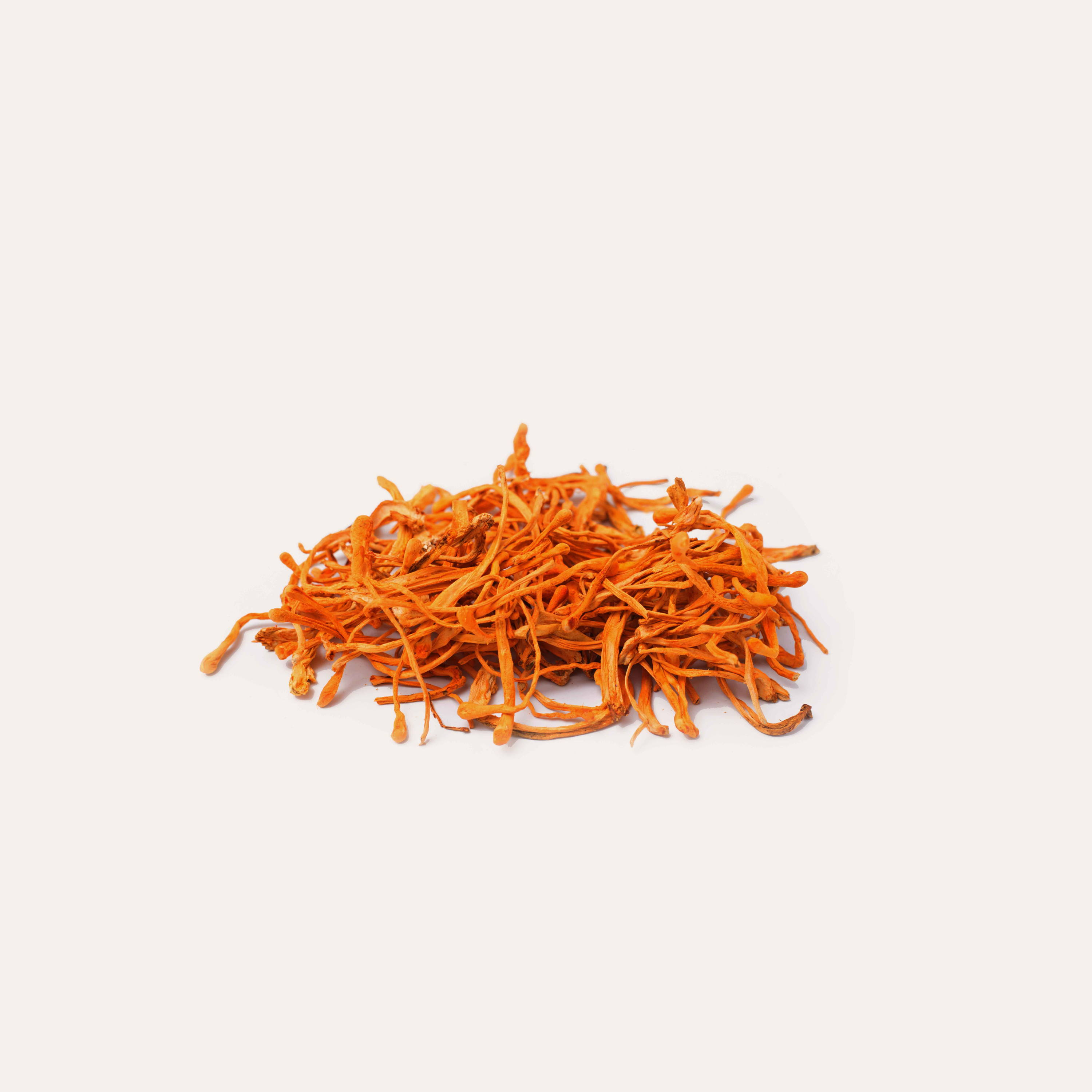 Cordyceps mushrooms on solid background