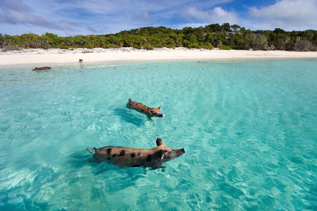 Bahamy Exuma