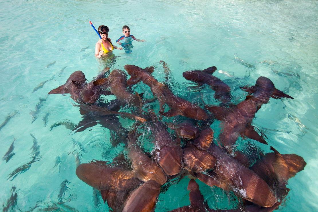 Bahamy Exuda