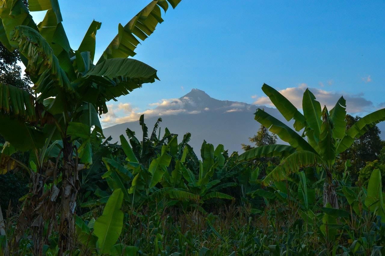 BeanBear volcano on horizon