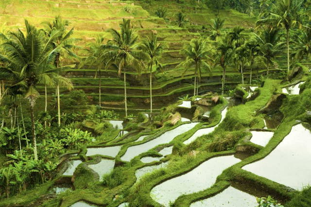 Visit Cultural Ubud & Holy Spring Water Temple