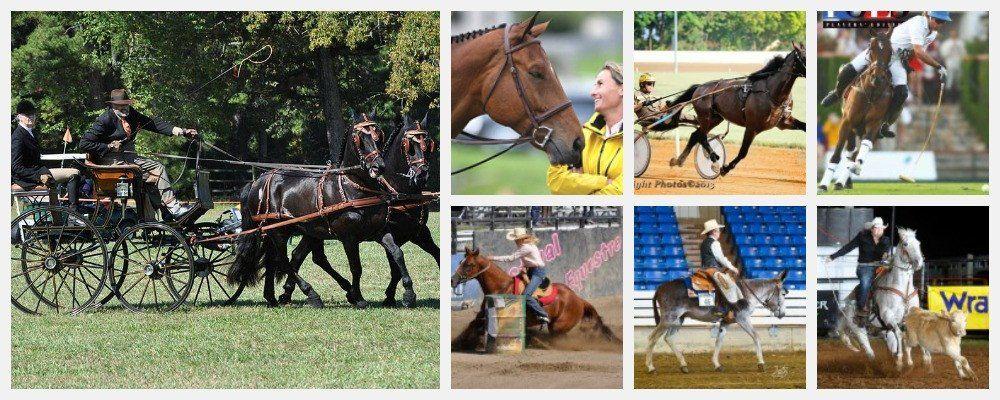 BRL Equine brand ambassadors