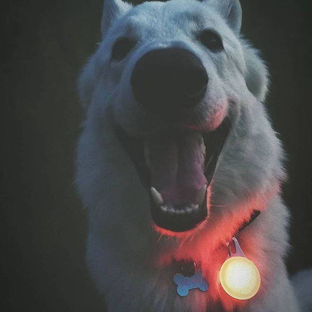 Dog Collar Lights