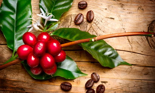 Coffee Particles A source of natural caffeine and polyphenols. It has slimming