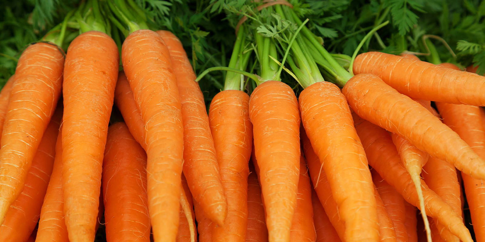 Why Carrots are the Essential Superfood - ZENB – ZENB US