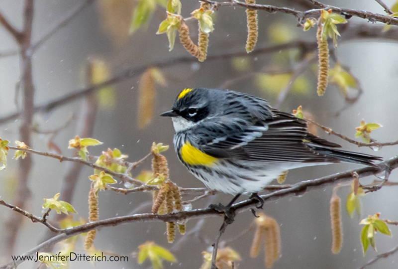 Help Birds in Bad Weather