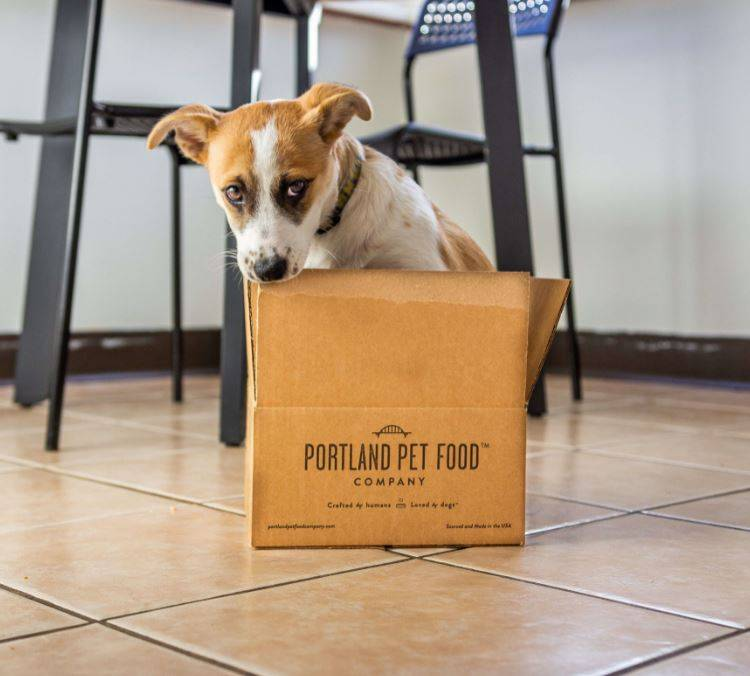 A puppy gnawing at the side of a Portland Pet Food subscription delivery box.