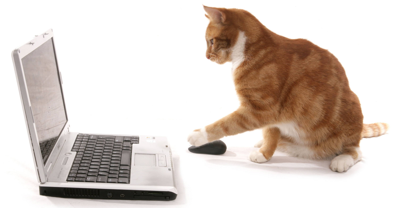 Kontakt zu  Cat Camino®