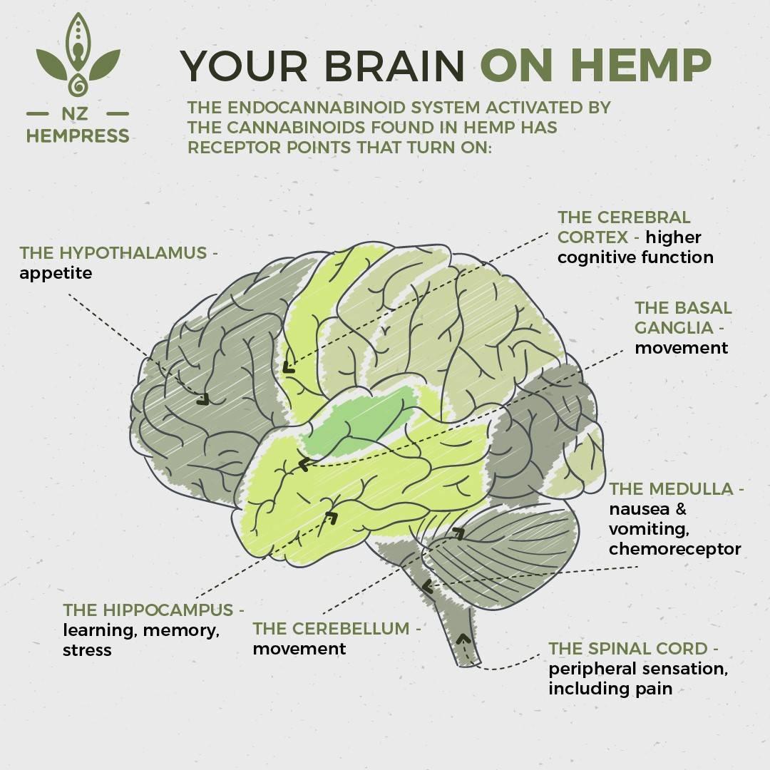 what is cbd hemp