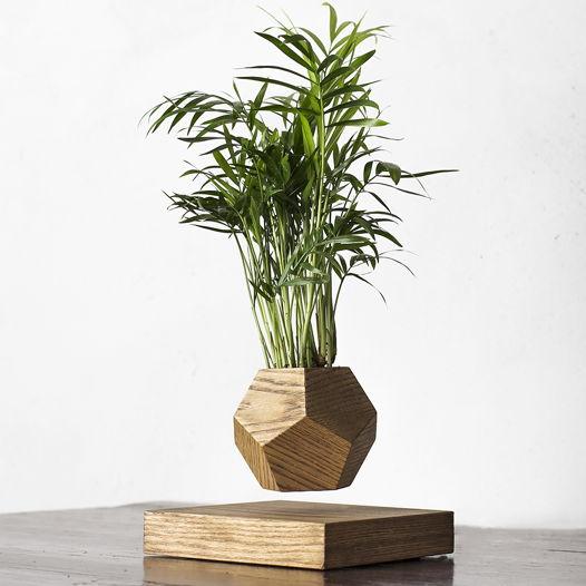 Левитирующее растение Wood Хамедорея темный