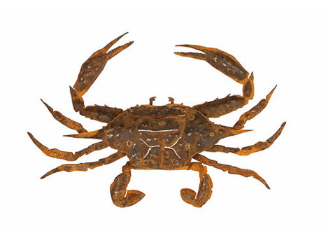 "Metal 36"" Blue Crab"