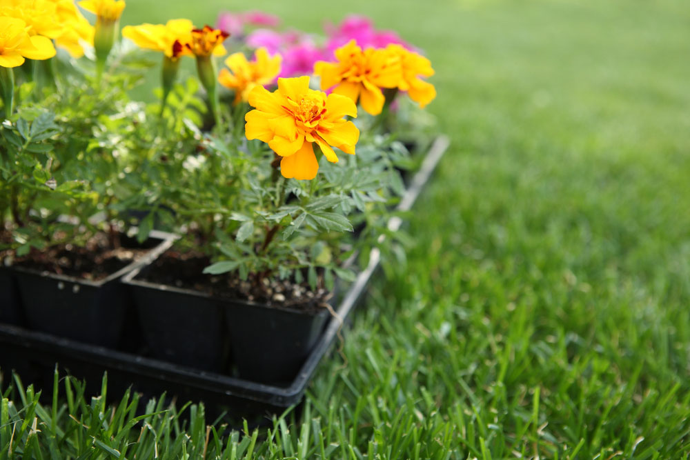 It's time to prepare your garden