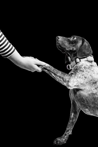 Biologisch abbaubare Hundekotbeutel von PooPick