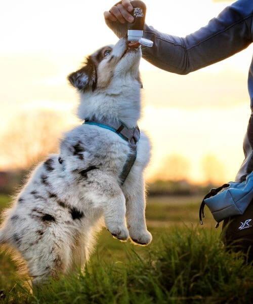Hundebedarf Trockenfutter Lamm