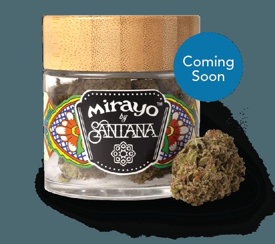 image of Mirayo CBD cannabis jar and flower