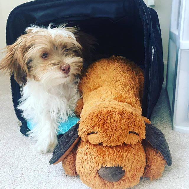 Pet Carrier Travel Bags