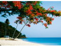 7 Nights in Caribbean Paradise for 2 to 4 People