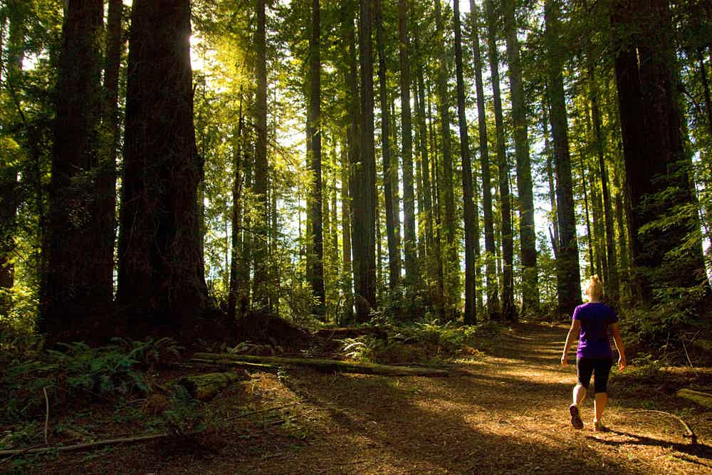 Hike the Grove of Old Trees in Occidental