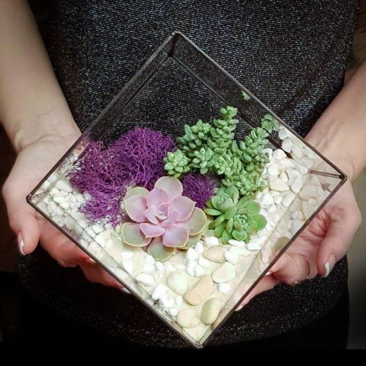 Флорариум с суккулентами la tendresse