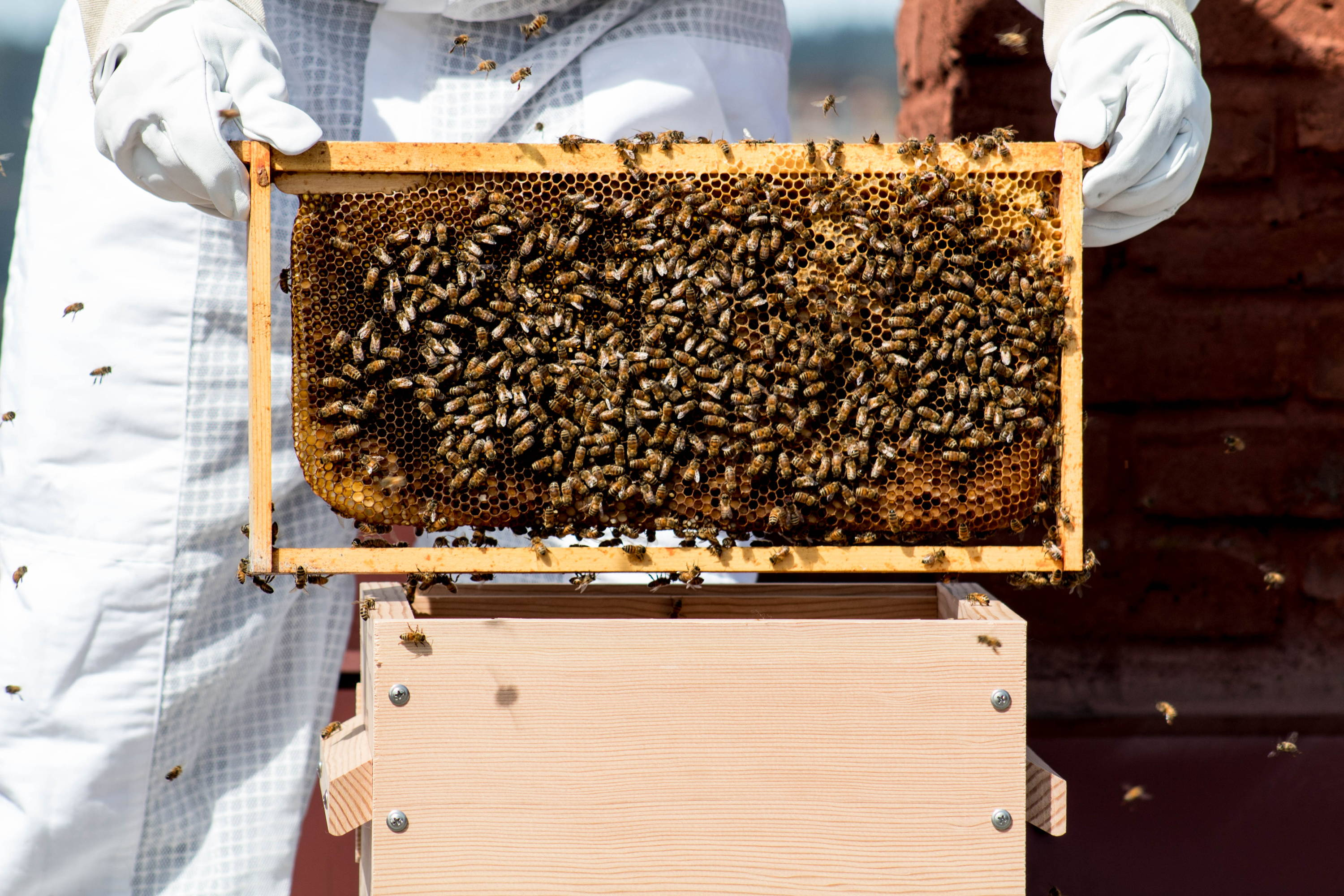 Beekeeping for beginners: where to start Basic tips 30