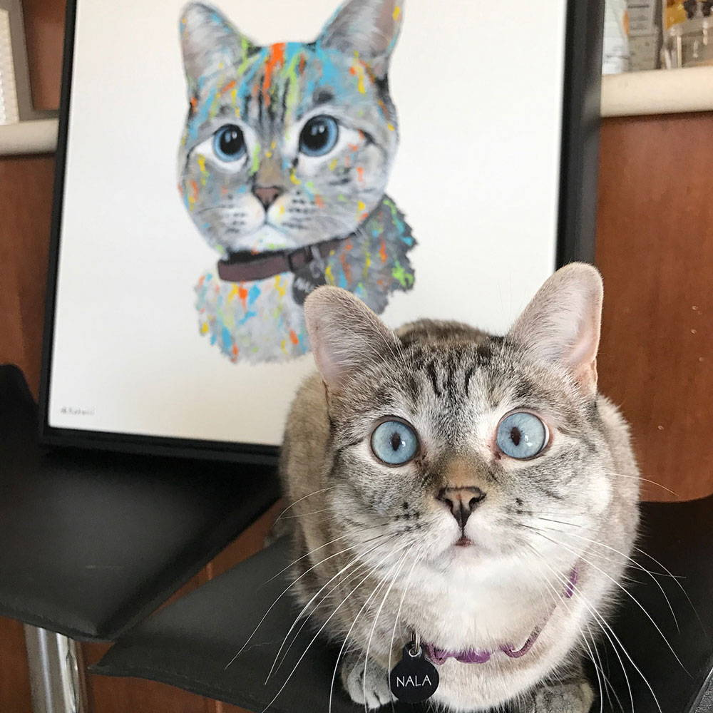 cat portrait - testimonial photo