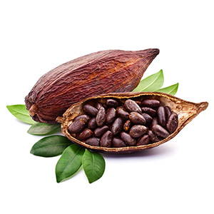 Organic Raw Cacao Bean