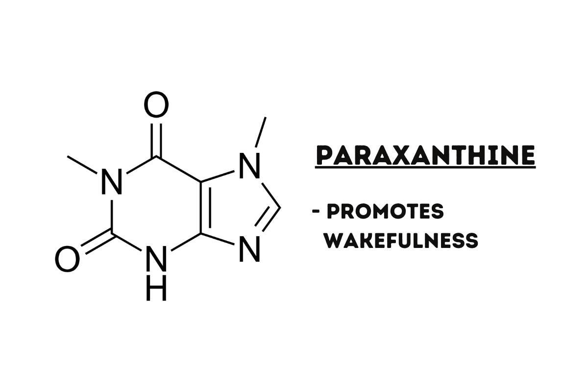 paraxanthine chemical illustration