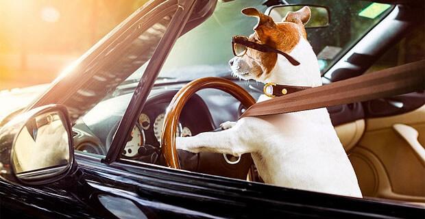 На «Радио Шансон - Екатеринбург» будут искать владельца счастливого водительского удостоверения - Новости радио OnAir.ru