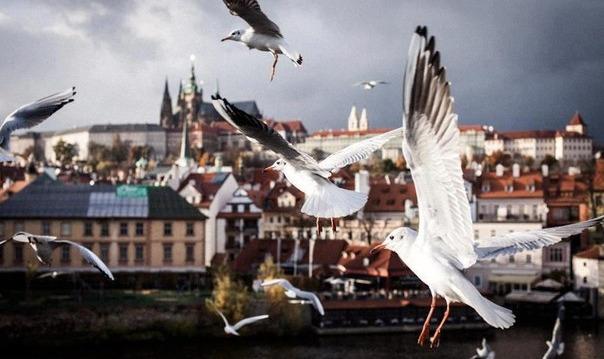 Влюбиться в Прагу за 3 часа
