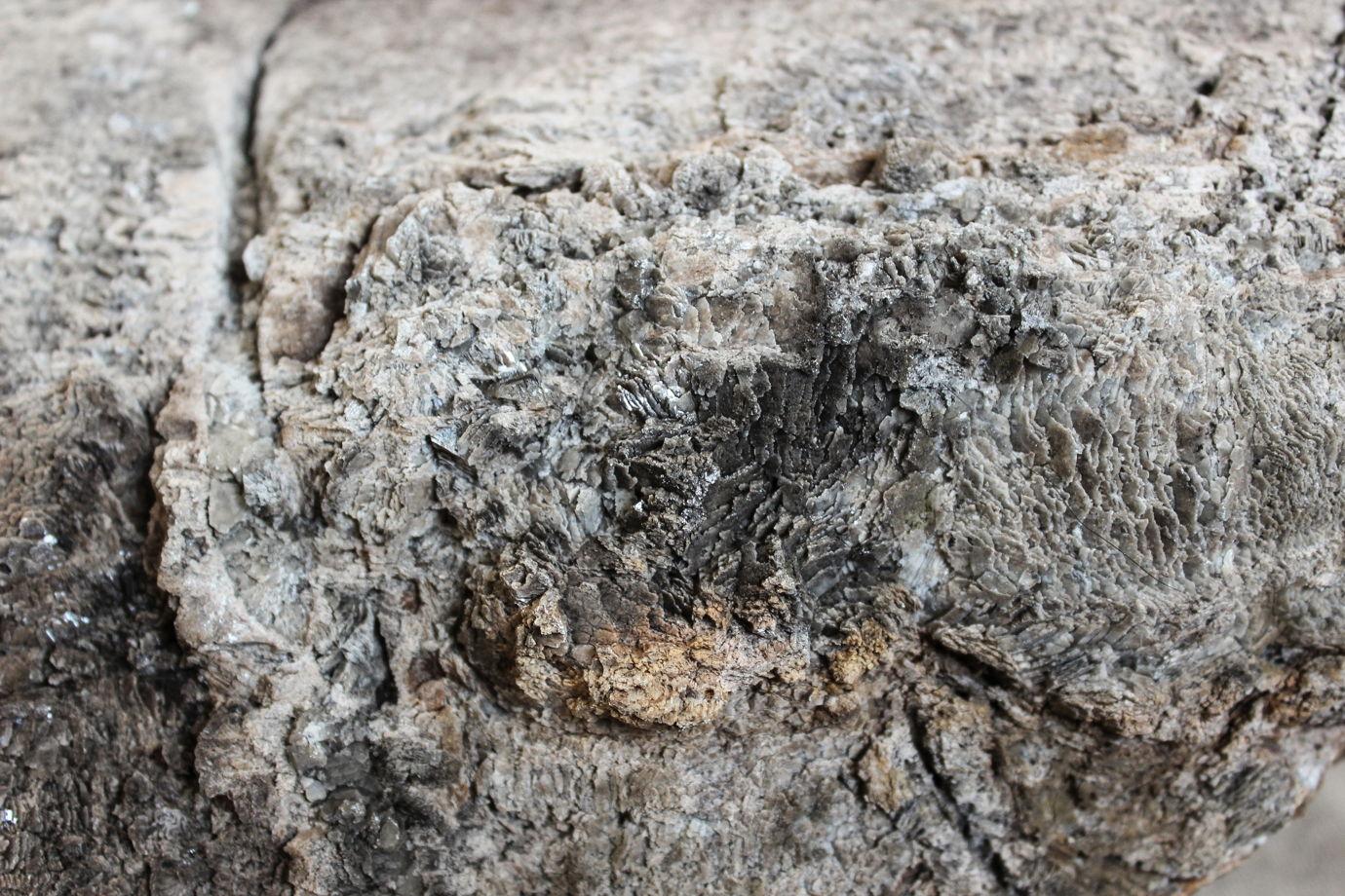 """Интерьерный камень окаменелое дерево """"Дерево Ноя"""""""