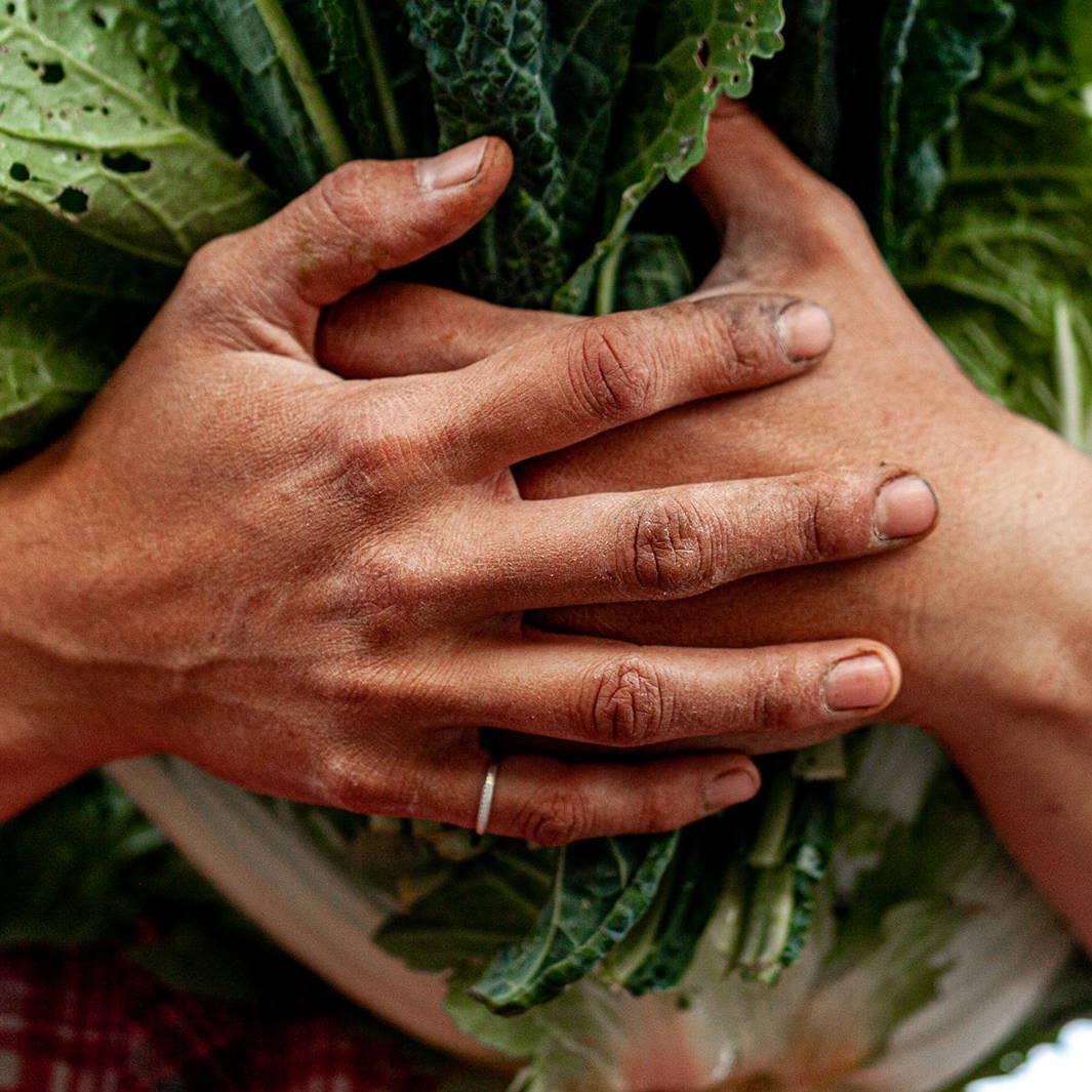 Davines farmer hands CSA