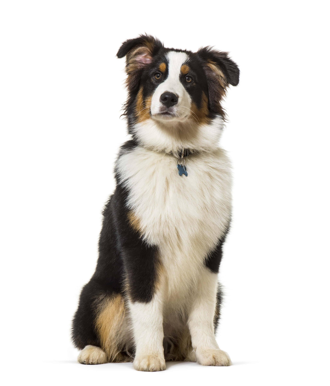 Abstammung deines Hundes entdecken