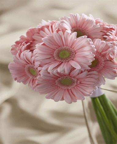 HF HOT PINK GERBERA FLOWERS