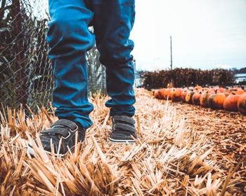 Pumpkin Trail at Franklin's Urban Forest