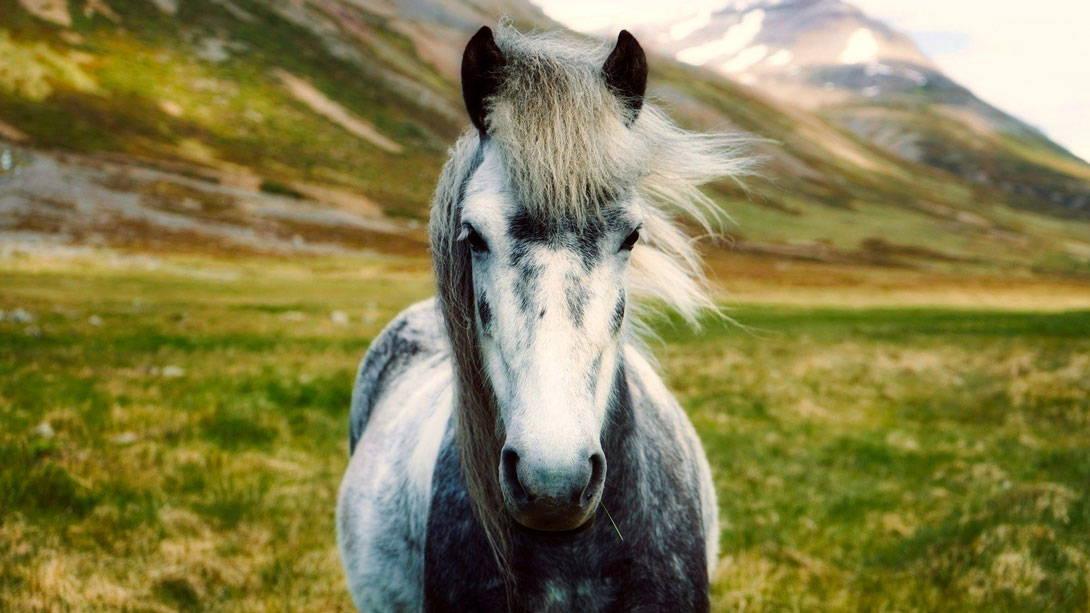 Welche Impfungen brauchen Pferde? - Titelbild