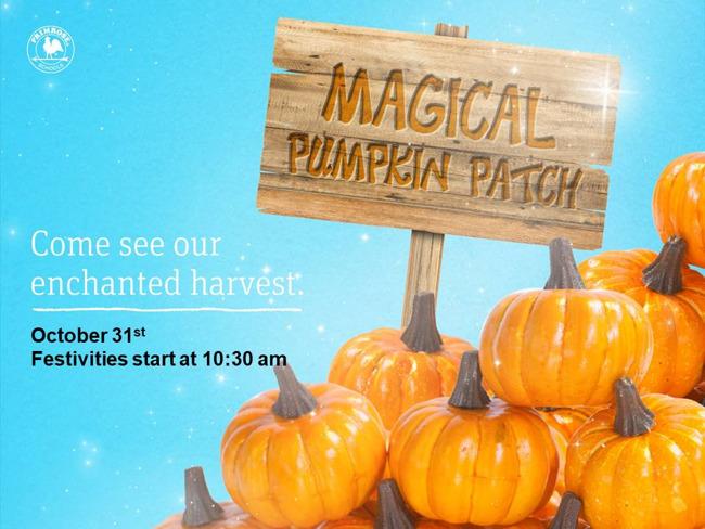 pumpkin patch, Primrose School at Greenway Plaza