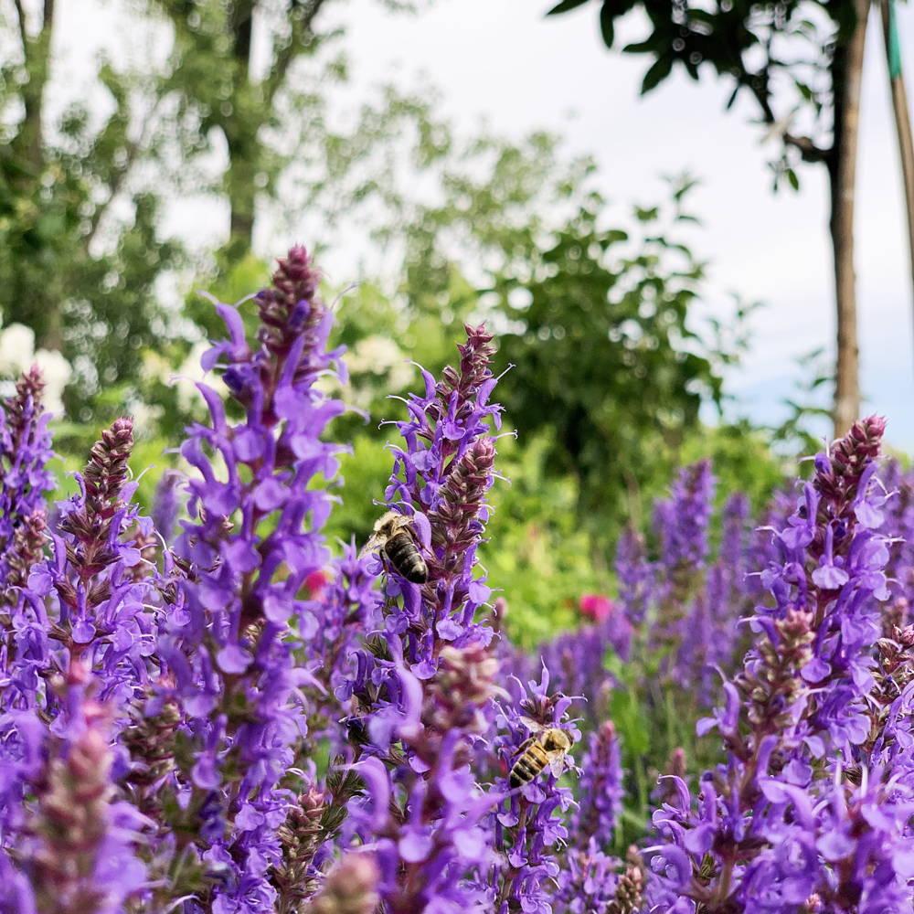 Bee day purple flowers